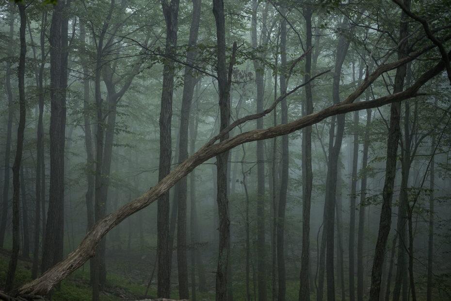 """""""The Fog"""" von Noah Kalina © Noah Kalina"""