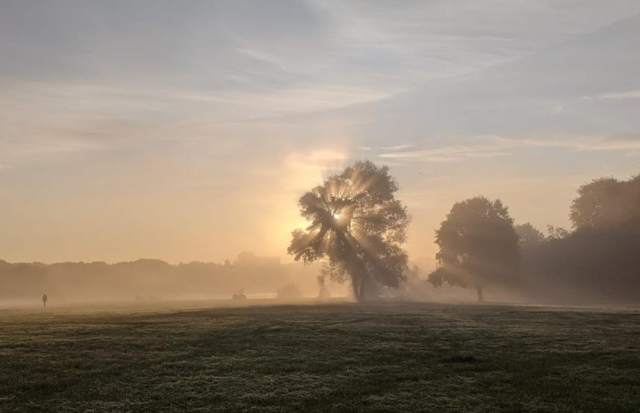 Baum im Nebel im Stadtpark © Moritz Stoll